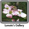 Lumoto's Gallery