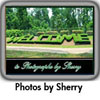 Photographs by Sherry